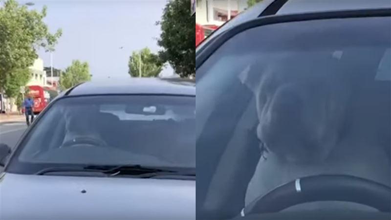 給我快滾回來!沙皮狗遭鏟屎官留車上 狂按喇叭宣示不滿