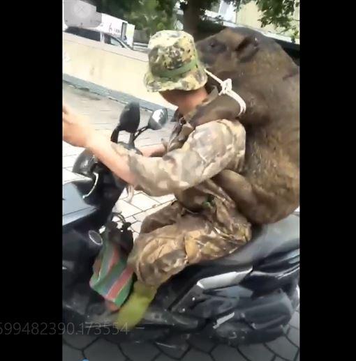 好神勇!獵人扛80kg「超大老鼠」一大坨黑竟是活山豬! 讀者提供