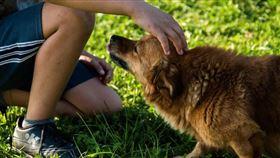狗,浪浪,流浪狗,米克斯,寵物(圖/示意圖/翻攝pixabay)