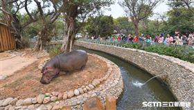 新竹動物園(竹市府提供)