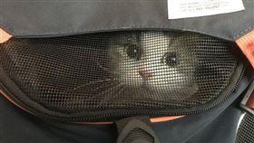 貓咪截圖 翻攝自Dcard