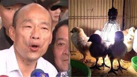 韓國瑜、雞