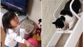 妹妹氣球飛到天花板,貓咪神救援。(圖/翻攝自抖音gomacha__n)