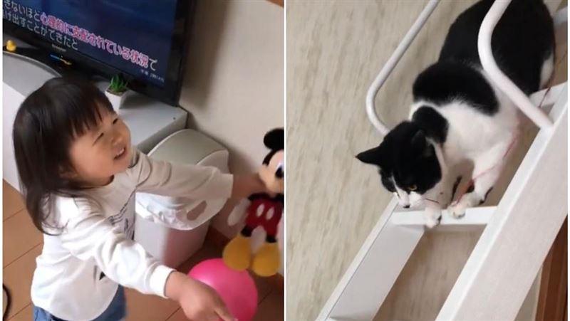 喵皇淪為奴才!貓保母幫小蘿莉拿氣球 貼心畫面網瘋傳