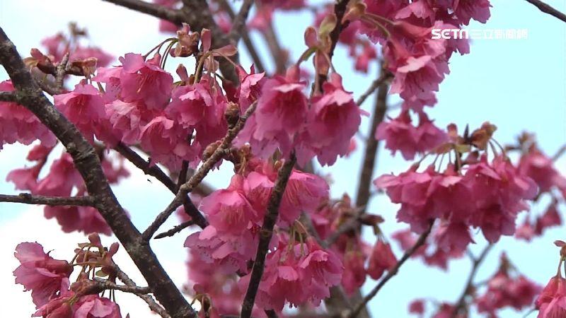 賞花秘境遍全台!春節打卡熱門地點曝