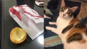 貓,貓咪,蛋塔,蛋撻,貓咪也瘋狂俱樂部(圖/Mia Liu授權提供)