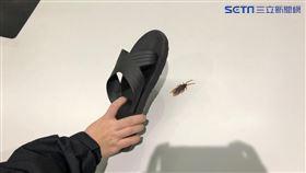 蟑螂,小強,打蟑螂,殺蟑螂,拖鞋(示意圖/資料照)