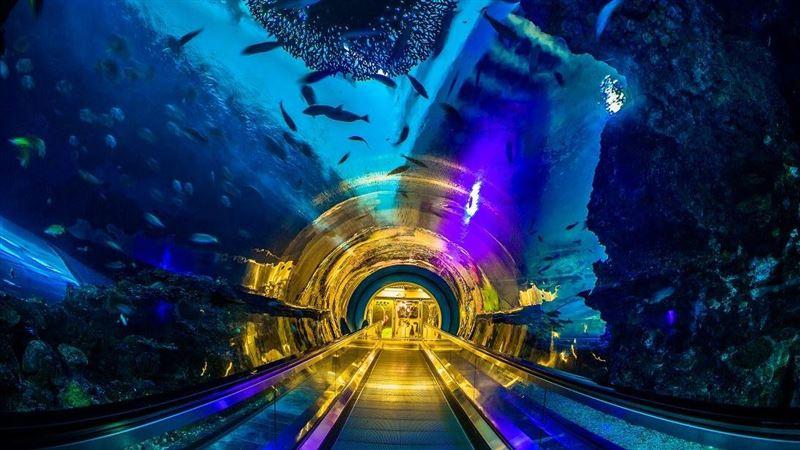走春景點 屏東海生館看深海中的螢火