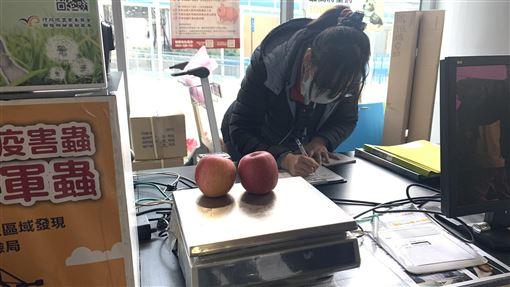 民眾違規攜帶蘋果入境 遭罰3000元南竿一民眾21日下午搭乘小三通黃岐航線入境馬祖,被查獲背包內裝有2顆新鮮蘋果,遭罰新台幣3000元。(馬祖檢疫站提供)中央社 109年1月22日