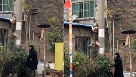 哈士奇手撐屋頂「懸掛空中」。(圖/翻攝自抖音用戶「@Tinating11」)
