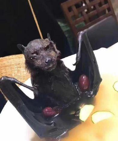武漢肺炎,中國,蝙蝠,海鮮