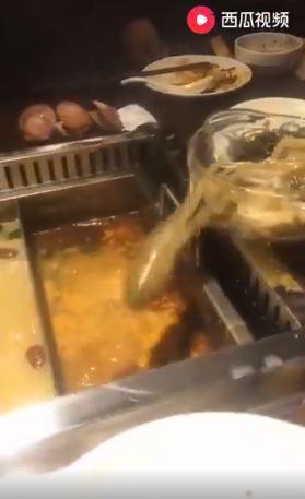 活章魚急逃命 撲通跳進滾燙麻辣鍋(翻攝自臉書)
