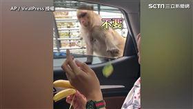 國外有位網友上傳了他們和在路上遇到的猴子的有趣互動。