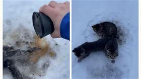 加拿大,冬天,小貓,尾巴,雪地,受困(圖/翻攝自Kendall Diwisch臉書)