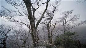 太平山(圖/陳飛攝影)