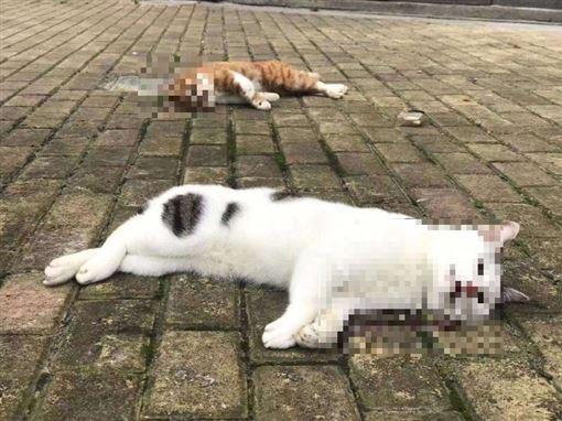 微博 貓狗會傳染 武漢病毒