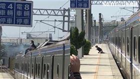 獨/男爬上列車車頂遭電纜擊落!全身冒煙痛苦哀嚎 畫面曝