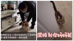 武漢肺炎肆虐,武漢小動物保護協會發起救援「留守」寵物行動。(圖/翻攝自「紅星視頻」、「睡著一隻捲毛貓」微博)
