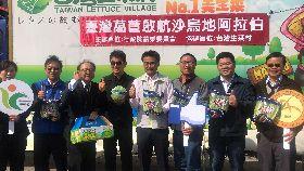 台灣萵苣首航外銷沙國