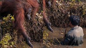 紅毛猩猩伸出幫助,正在河裡幫它清除毒蛇的人類。(組圖/翻攝自 anil_t_prabhakar IG)