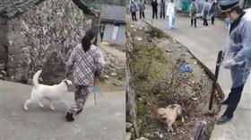 武漢肺炎,屠狗,浙江,溫州,殺狗。(圖/翻攝自推特)