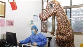 長頸鹿,醫院,看病,大陸,翻攝紅星新聞