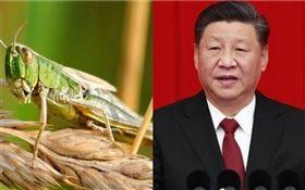 蝗蟲 中國