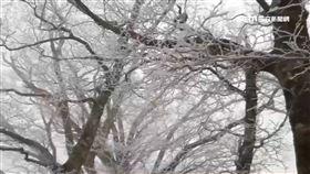 凍!太平山直降零下2度 銀白世界如仙境