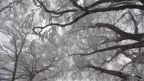 宜蘭,太平山,國家森林遊樂區(圖/羅東林管處提供)