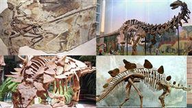 恐龍,冷血,溫血,美國,研究(圖/翻攝自維基百科)