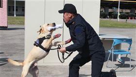 拉不拉多犬(哈迪)領犬員莊又頲實施門禁檢查。(記者邱榮吉/攝影)