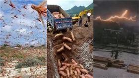 疫、蝗、雹災接踵來 中國整肅聖經十誡後…十災已發生三災