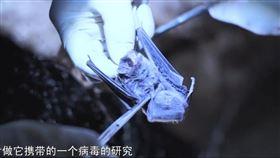 肺炎,蝙蝠,中心,肖波濤,海鮮市場,實驗室,感染(圖/翻攝自YT-看看新闻Knews)