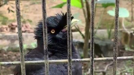 八哥鳥忙喊「戴口罩」遊客:萌翻了