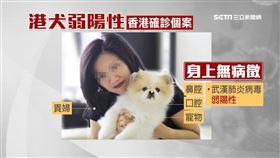 香港貴婦確診 家中寵物狗驗出弱陽性
