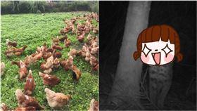 雞放養被「偷吃」!他怒裝監視器緝凶…見這幕秒融化:好Q(圖/翻攝自Dcard)