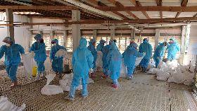雲林2禽場染流感遭撲殺 加強防疫措施