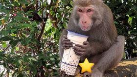 獼猴 被搶  Foodpanda