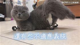 揮別失去四肢的日子 截肢貓靠3D列印獲重生