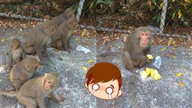 民眾抱怨,鳳梨遭到台灣獼猴搶走,全家大小糾團來。(圖/翻攝自爆怨公社)