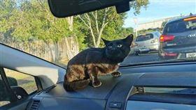 黑貓,女兒,學校,流浪,車。(圖/翻攝自《The Dodo》)