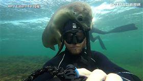 ▲小海獅友善地主動接近野生攝影師、和他一起玩耍。(圖/AP/Caters TV 授權)