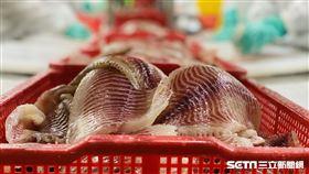 鯛魚。(圖/記者馮珮汶攝)