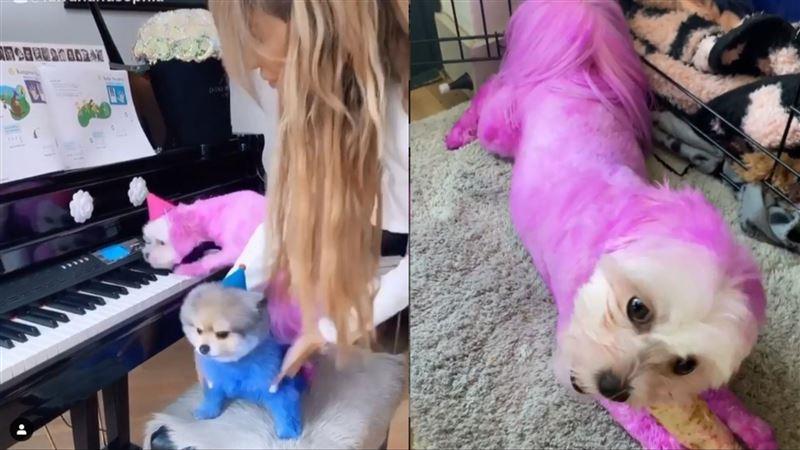 女星對狗做這事 網嚇瘋狂向動保求救