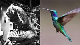 發現全球最小的恐龍如蜂鳥。(示意圖/翻攝自Pixabay)