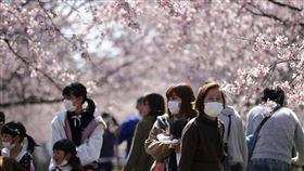 日本,武漢肺炎,口罩,櫻花,新冠肺炎,防疫,圖/美聯社/達志影像
