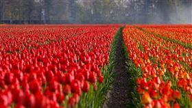 紅花(圖/翻攝自pixabay)