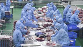 疫情中復工  中國力求兼顧生產與防疫因為武漢肺炎疫情,中國在經濟壓力下,多地採取「分區分級」的控管和復工原則,如何兼顧生產和防疫成為挑戰。圖為湖南食品公司員工採取防疫措施後,入廠包裝產品。(中新社提供)中央社  109年2月16日