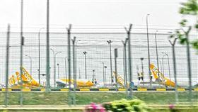 酷航大批飛機停在機場。(圖/翻攝自酷航臉書)