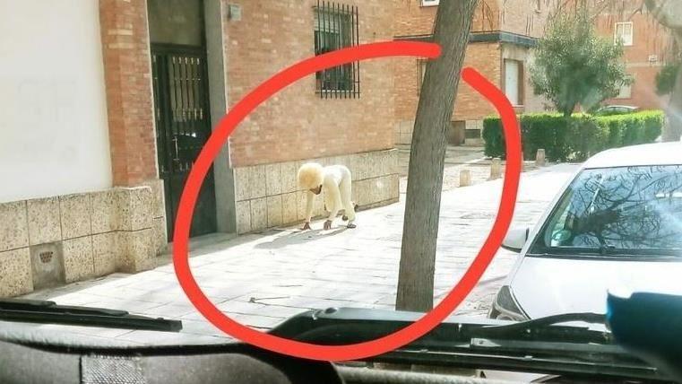 西班牙人扮狗遛自己!女醫生「工作10小時」哭求:別出門